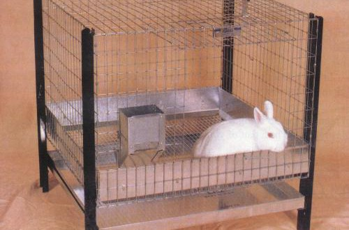 rabbit-cages